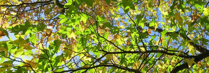 leaves_720x252