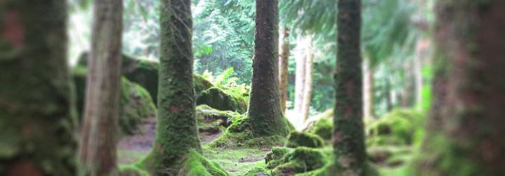 trees_01_720x252